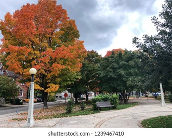Autumn leaf in Canada October 2018