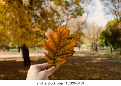 Autumn leaf in city park
