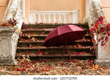 Autumn leaf fall. Red and yellow leaves on the destroyed old stone steps burgundy (marsala color) umbrella. Blur effect.