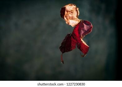 Autumn leaf flies alone
