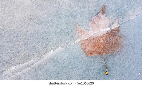 Autumn leaf freezing into ice