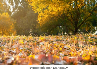 autumn leaf in the grass closeup, beautiful autumn forest, bright sunlight at sunset