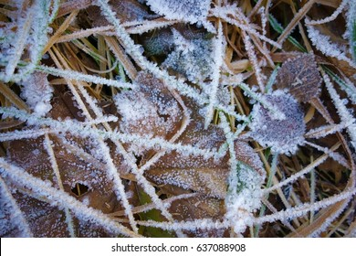 Autumn leaf with hoarfrost