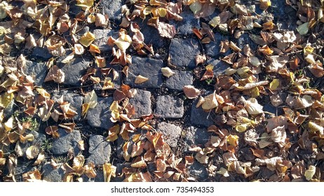 autumn leaf leaves nature texture orange yellow background