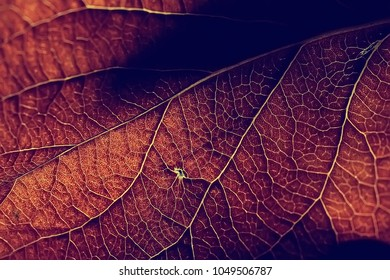 autumn leaf macro / leaf texture, design beautiful nature, yellow sunny autumn background