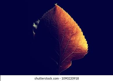 autumn leaf macro / leaf texture, design beautiful nature, yellow sunny autumn background