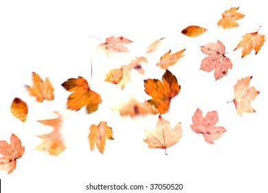 autumn leaf in move isolated