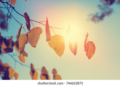 Autumn leaf nature background. Yellow leaves over blue sky