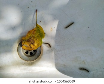 autumn leaf in the old sink in a sunny day