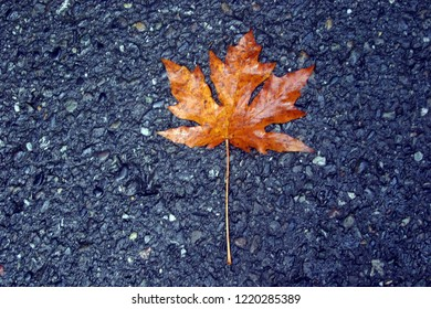 Autumn leaf on pavement