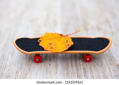 Autumn leaf on a skateboard. Concept comes autumn