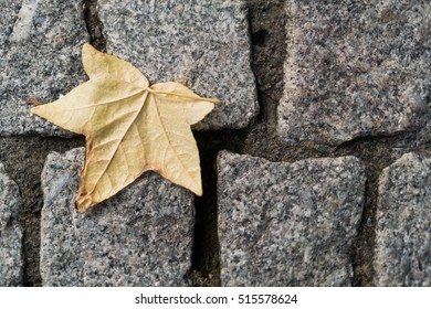 autumn leaf on stone floor