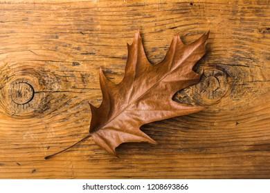 autumn leaf on wood black background