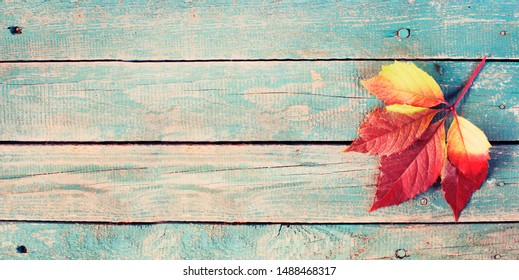 autumn leaf   over wooden background with copyspase