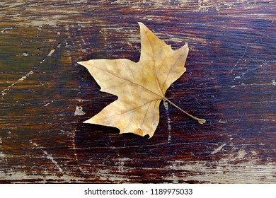 Autumn leaf over a wooden scratched table
