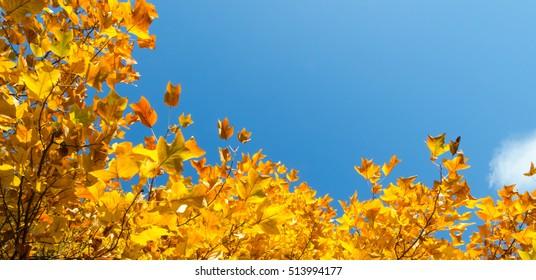 Autumn leaf with sky.