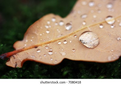 Autumn Leaf with a water drop