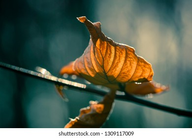 Autumn leafs with bokeh