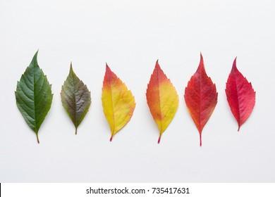 Autumn leafs colorful rainbow color gradient summer autumn season change concept