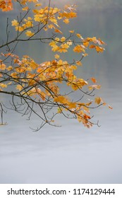 Autumn leafs in front of lake