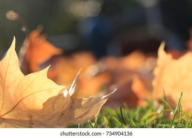autumn leafs level