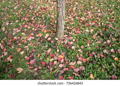 Autumn leafs on the green grass