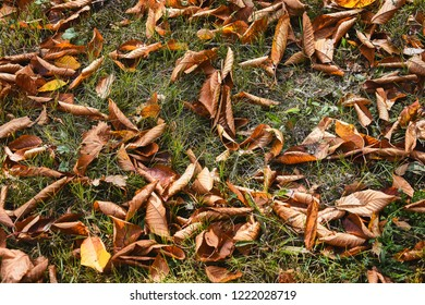 Autumn leafs on the ground detail