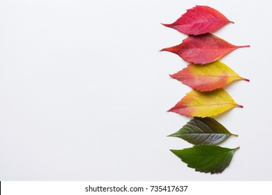 Autumn leafs in a row colorful rainbow color gradient summer autumn season change concept with copy space