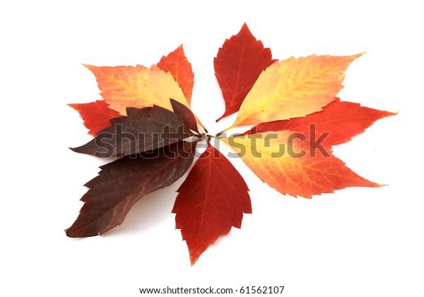 autumn-leaves-600w-61562107.jpg