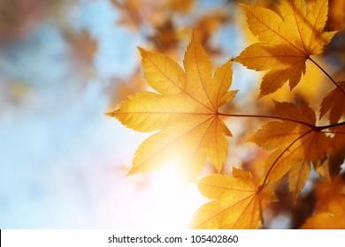 autumn leaves against the blue sky