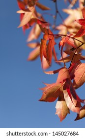 Autumn leaves against clear blue sky with shallow DOF