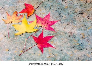 Autumn Leaves arranged on decorative paper