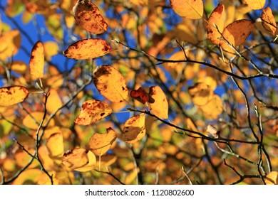 Autumn Leaves, Ashdown Forest, Sussex, UK