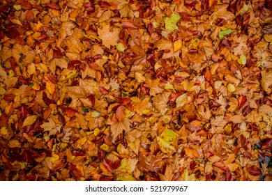 Autumn leaves background, combination of yellow, orange and red