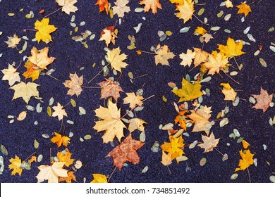 autumn leaves background. Fallen leaves in autumn on the asphalt. Texture. Background of autumn leaves.