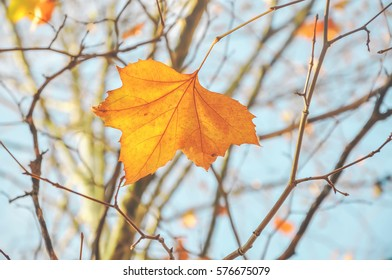 Autumn Leaves, Background, Nature