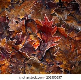 Autumn leaves background. Shallow DOF