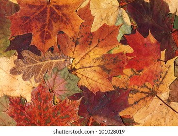 Autumn leaves background, very high resolution.