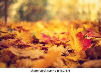 Autumn leaves background. Yellow maple leaf over blurred texture with copy space. Concept of fall season. Golden autumn card.