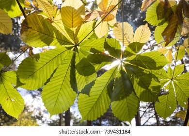 Autumn leaves in backlight in the forest. Autumn background.