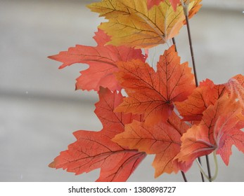autumn leaves in beautiful colers