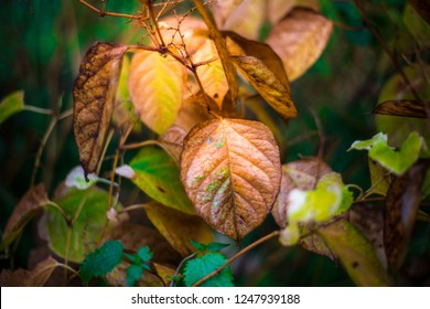 Autumn leaves are beautiful colored