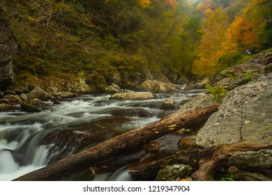 Autumn leaves are beautiful on the Little River in Smoky Mountains National Park Tennessee