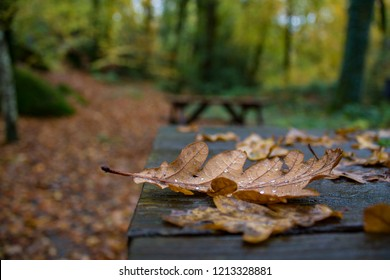 Autumn Leaves at Becky Falls, Dartmoor