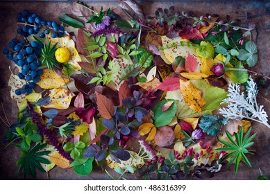 Autumn leaves and berries on a brown wooden background, Autumn background, Colors of Fall
