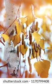 Autumn leaves of a birch against the background of a tree. Beautiful autumn background