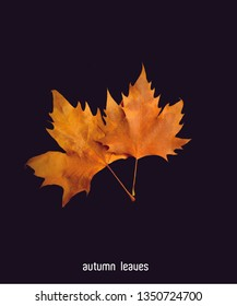 autumn leaves black