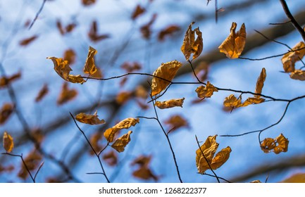 autumn leaves with blue background