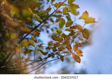Autumn leaves with the blue sky