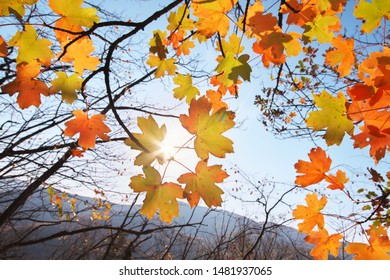 Autumn leaves with the blue sky background. Nature composition.